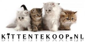 BannerKittenTeKoop2012rechthoek